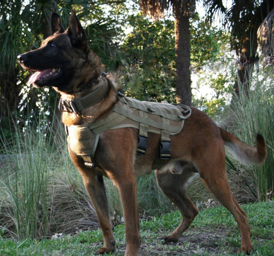 Protection Dog Training by Mike Ritland
